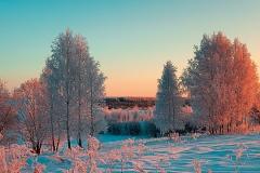 Автор Сергей Соколов. Морозный лес. Тиманский кряж