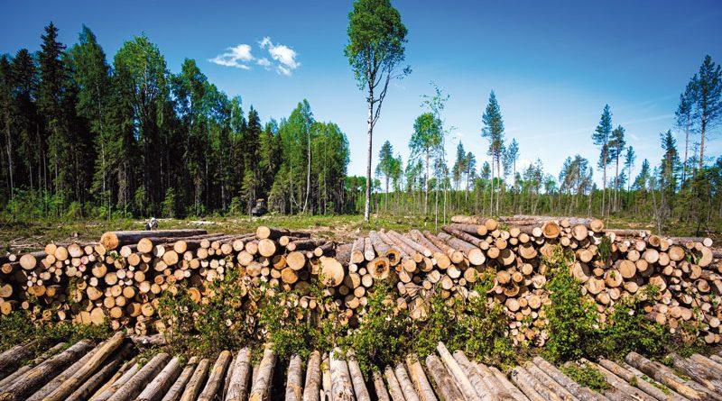 Секреты лесной делянки