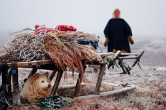Автор Евгений Рожкин. Отдых пастушки