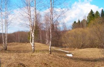 Светлана Соколова. Прощай, зима!